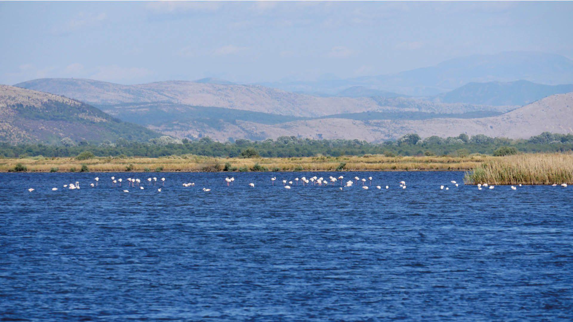 ulcinje salinas flamingos