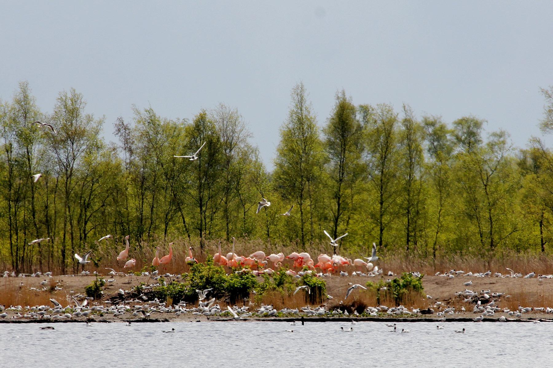 zwillbrock-flamingo-duitsland